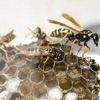 Southend wasp nest removal